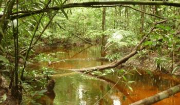 Igarapé Manaus
