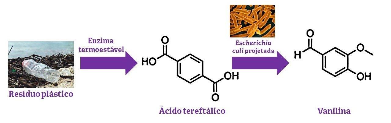 PET- transformado - vanilina