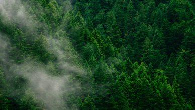 Biomassa Floresta