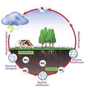 Ciclo de nitrogenio