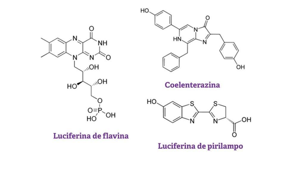 Estruturas químicas de luciferinas