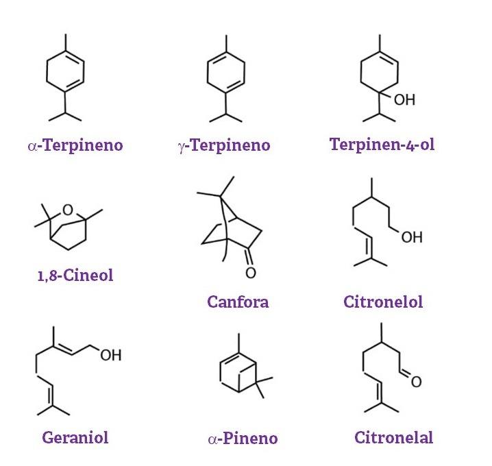 Estrutura dos óleos essenciais